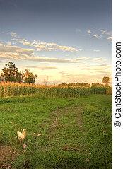 agricoltura, paesaggio, in, tramonto