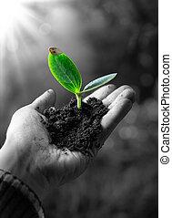 agricolture, conceito, pequeno, planta