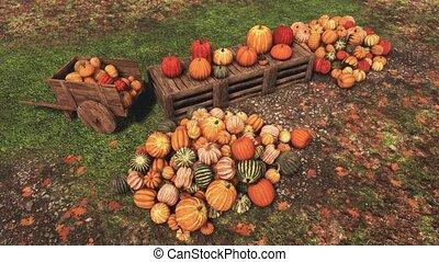 agriculteurs, rural, marché, automne, récolte, potirons