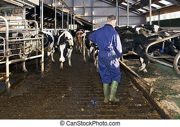 agricultor, limpeza, um, estável