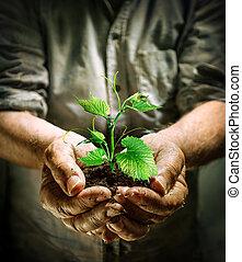 agricultor, mãos, segurando, um, planta verde