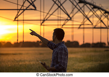 agricultor, olhar, sistema irrigação, em, campo, em, pôr do...