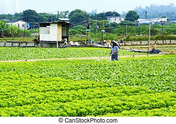 agricultor, terra, pulverização, cultivado