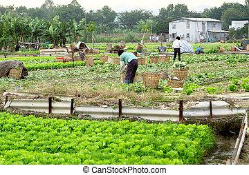 agricultor, terra, trabalhando, cultivado