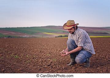 agricultor, verificar, solo, qualidade, de, fértil,...