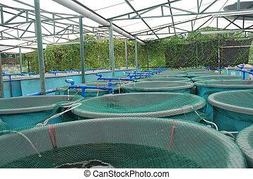 agricultura, acuacultura, granja