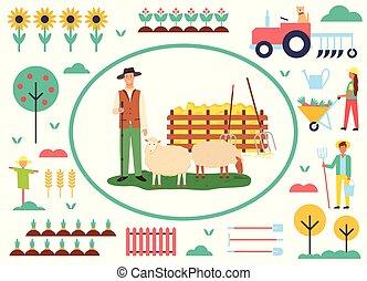 agricultura, agricultura, sheep, animal, homem