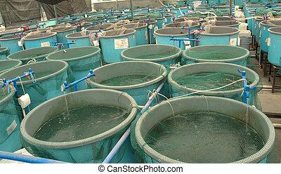 agricultura, aquaculture, fazenda