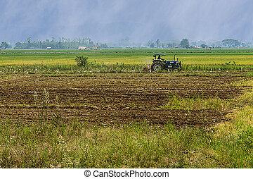 agricultura, arar, trator, ligado, trigo, cereal, campos arroz