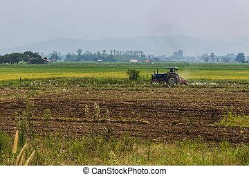 agricultura, arar, trator, ligado, trigo, cereal, campos