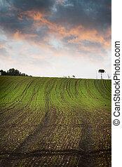 agricultura, campo verde, naturaleza