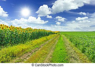agricultura, campos