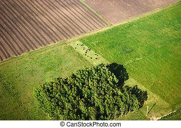 agricultura, campos, de, avião