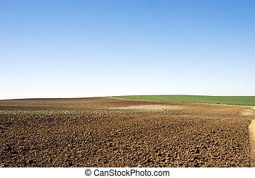 agricultura, campos, sob, profundo, céu azul