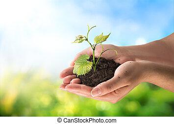 agricultura, concepto, poco, planta