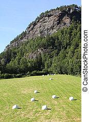 agricultura, em, noruega