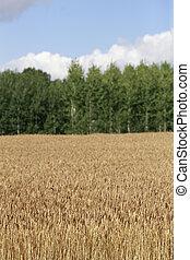 Agricultura, finlandés