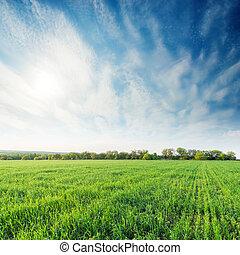 agricultura, grama verde, campo, e, profundo, céu azul, com, nuvens, em, pôr do sol
