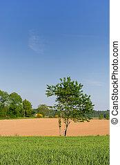 agricultura, paisaje
