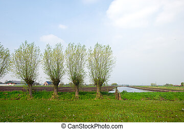 Agricultura, paisaje, holandés