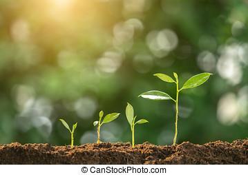 agricultura, planta, sembrar, crecer, paso, concepto, en, jardín, y, luz del sol