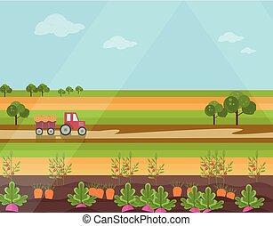 agricultura, terra, estação, campo, vetorial, fundo, colheita, vista