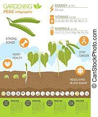 agricultura, trabajo, jardinería, template., infographic., ...