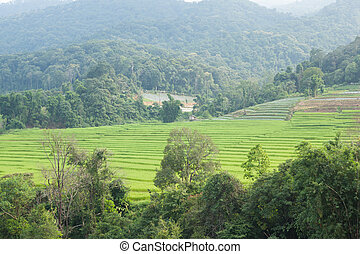 Agricultural areas in the mountains
