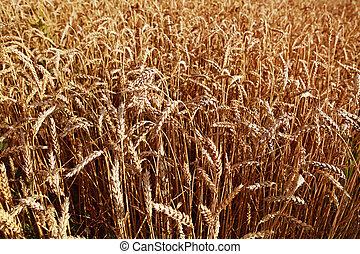 agricultural background