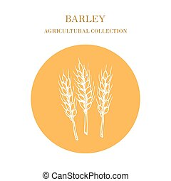 Agricultural collection. Barley