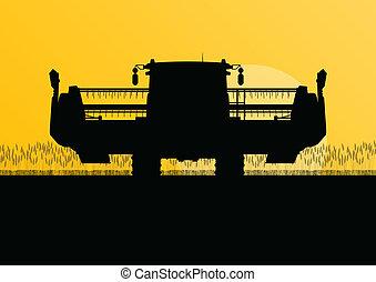 Agricultural combine harvester in grain field seasonal ...