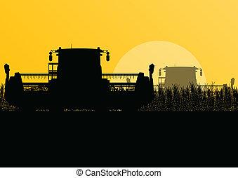 Agricultural combine harvester in grain field seasonal...
