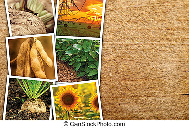 Agricultural crops photo collage