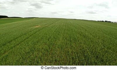 Agricultural field. Flight over the agricultural field. 71 -...