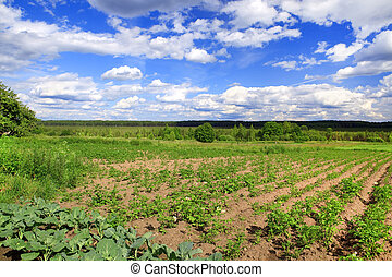 Agricultural field in a sunny day in Belarus