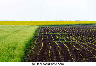 Agricultural field in the spring