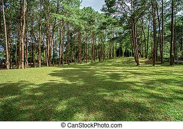 Agricultural Field, Land, Meadow, Public Park, Thailand