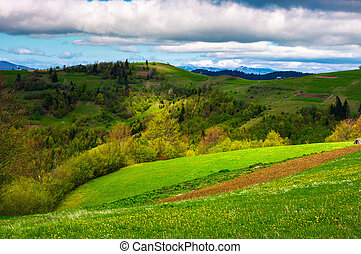agricultural field on a grassy hill. beautiful rural scenery...