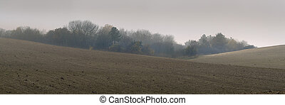 Agricultural field on a misty day