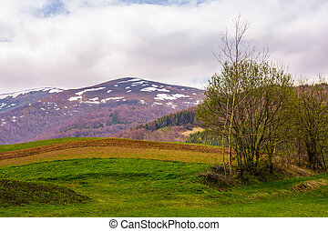 agricultural field on hillside in springtime - agricultural...