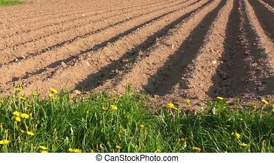 Agricultural field that was plowed furrows for planting...