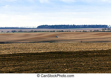 agricultural field with cereal