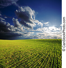 agricultural field with green grass under deep blue sky with...