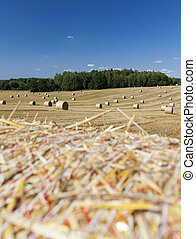 agricultural field with prickly straw