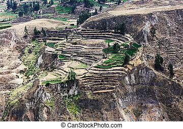fields in a mountain valley