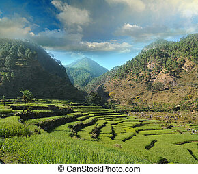 agricultural fields in the Himalayas