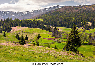 agricultural fields on grassy slopes in springtime....