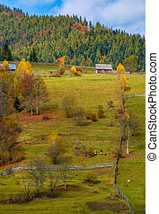 agricultural fields on hillside near forest. lovely autumnal...