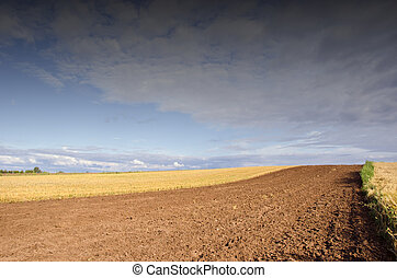 Agricultural fields.