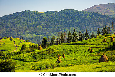 agricultural fields with haystacks on hills. beautiful...